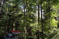 木々に囲まれたサイト