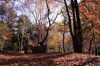 晩秋のキャンプ